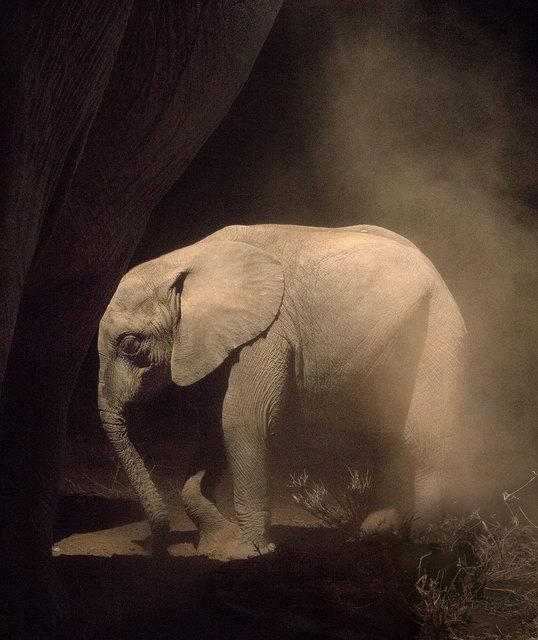 , 'Elephant Baby Statue,' 2018, Fahey/Klein Gallery