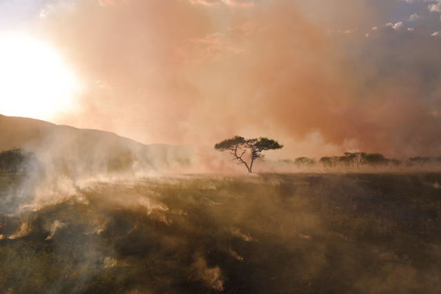 , 'Serengeti Fire,' 2017, DATG Concept