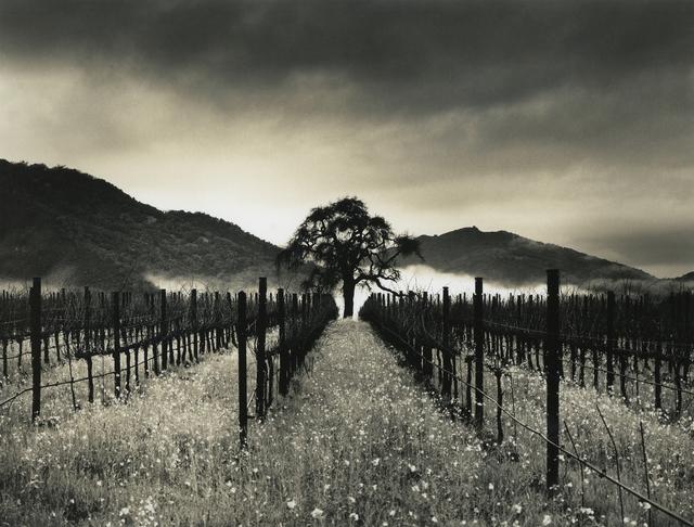 , 'Carmel Valley, Oak,' 2015, Photography West Gallery