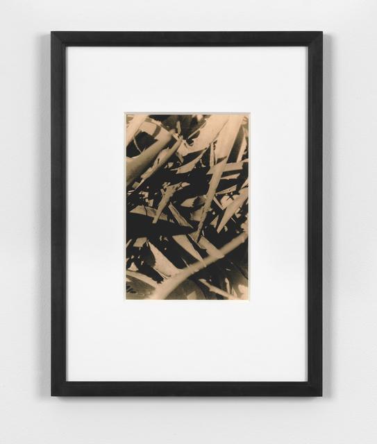 , 'Michio Harada, Koichikawa Botanical Gardens no.1, 1971,' 2015, Simon Lee Gallery