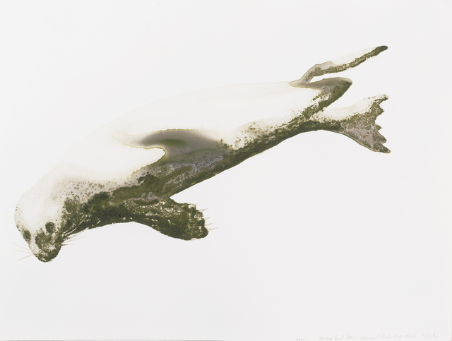 , 'Harbor Seal (Phoca vitulina),' 2014, Parrish Art Museum