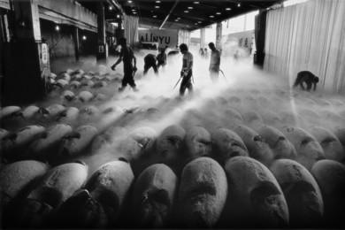 Chao-Liang Shen, 'Tsukiji Fish Market, Tokyo, Japan: 1994.07,' 1997, Japan Society Benefit Auction 2016