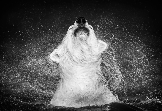 David Yarrow, 'Diamonds in the Sky', 2018, Visions West Contemporary