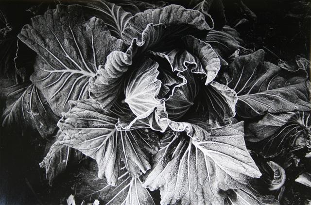 , 'Cabbage (No. 2812),' 1989, Galerie Bob van Orsouw