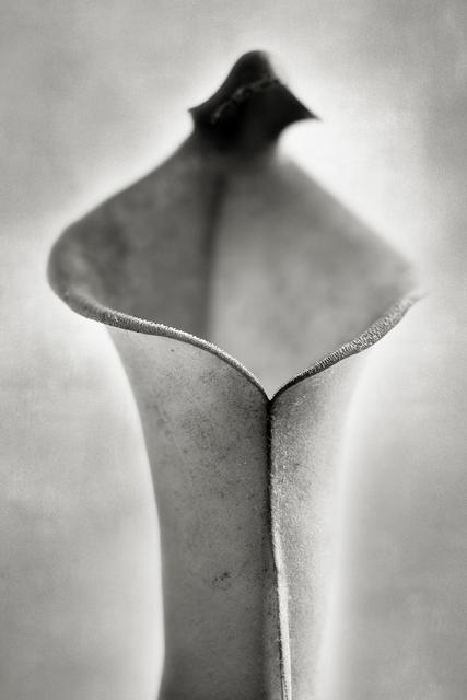 , 'Sun Pitcher,' , photo-eye Gallery