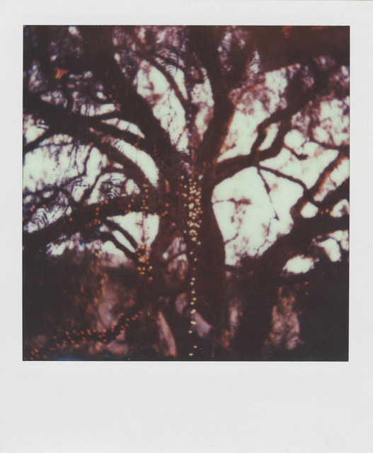 , 'The trees are full of fairy lights,' 2014, Edward Cella Art and Architecture
