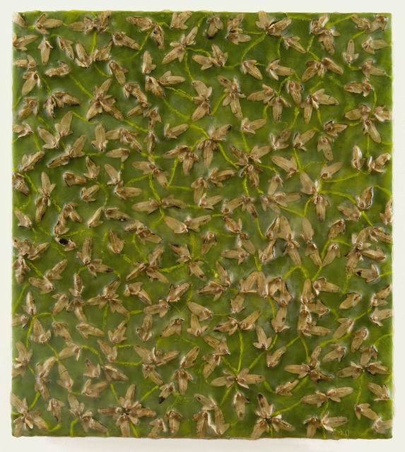 , 'Carpinus Tunnel Syndrome,' 2006, Carrie Haddad Gallery