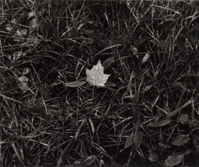 , 'Leaf in Grass, Cushing, ME,' 2013, Pucker Gallery