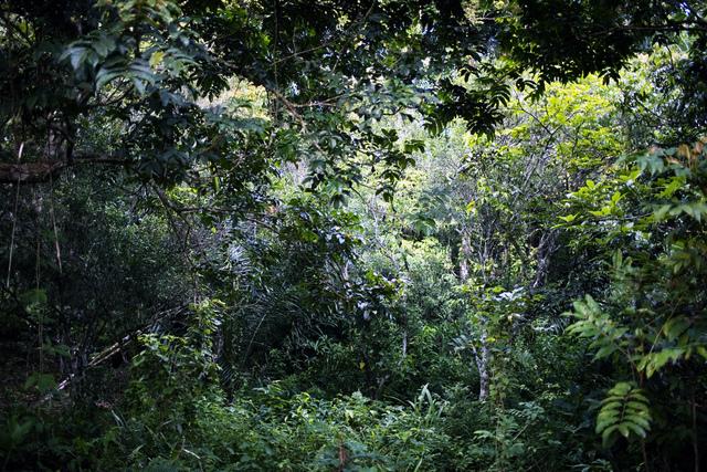 , 'Phantoms of the Congo river (019),' 2011-2012, Galerie Galea