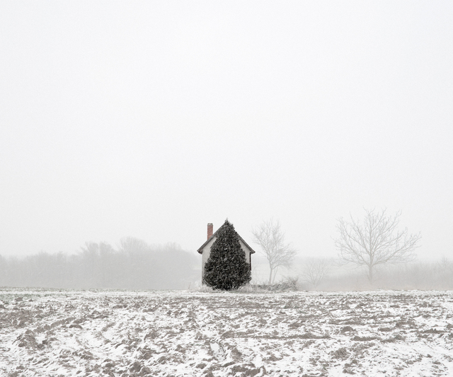 Tamas Dezso, 'Tree and House (West Hungary, 2011)', 2011, The Photographers' Gallery | Print Sales