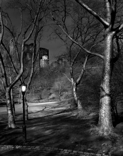 , 'Deep in A Dream - Central Park - 4am London Plane Trees,' 2009, Holden Luntz Gallery