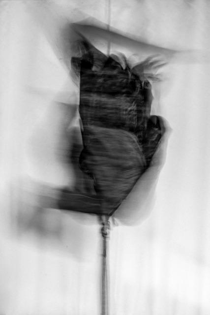 , 'Allomyrina Dichotoma 1,' 2017, The Print Atelier