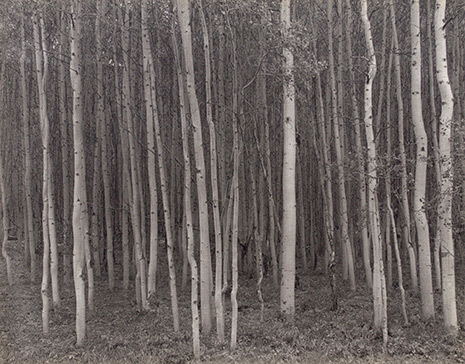 , 'Aspen Grove, Aspen, CO,' 1969, Gallery 270