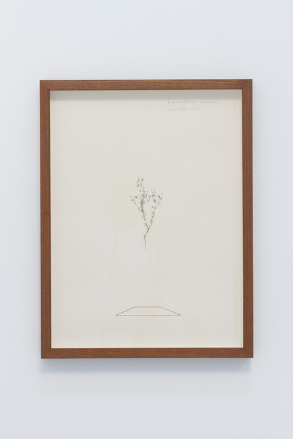 , 'Herbarium III,' 2014, narrative projects