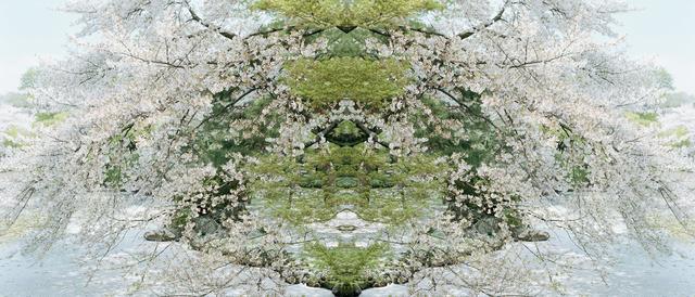 Ryo Ohwada, 'Sakura round', 2006, Photography, Lambda print, Micheko Galerie