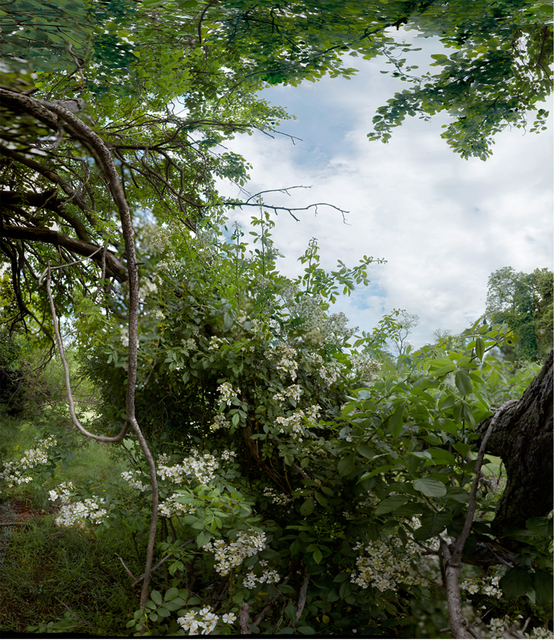 Anne Rowland, 'Rosa Multiflora [Glenmeade, Bluemont, 2009]', 2009, Hemphill Fine Arts