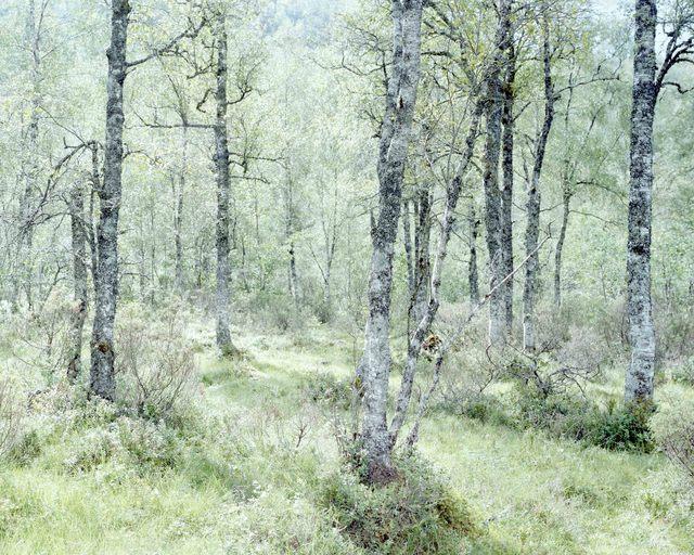 , 'Forest,' 2014, Borderline Art Space