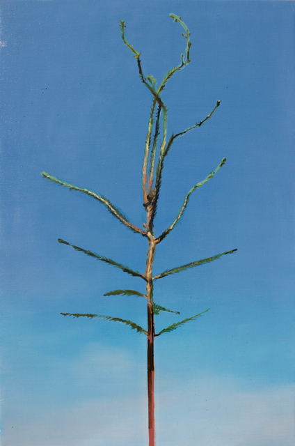 , 'Picea abies #6,' , Whitehouse Gallery