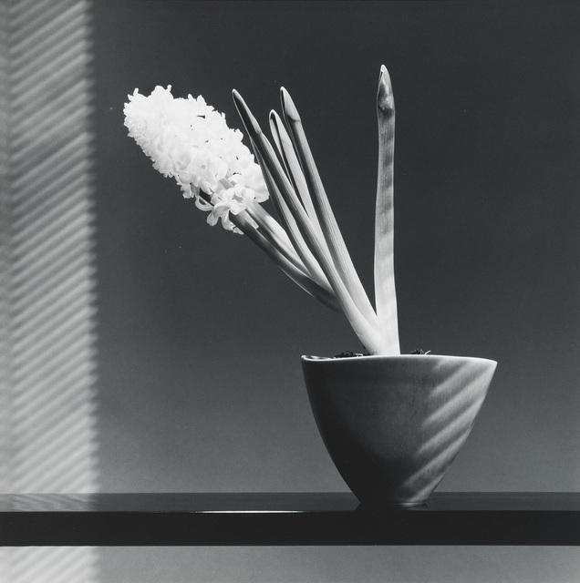 Robert Mapplethorpe, 'Hyacinth', 1986, Phillips