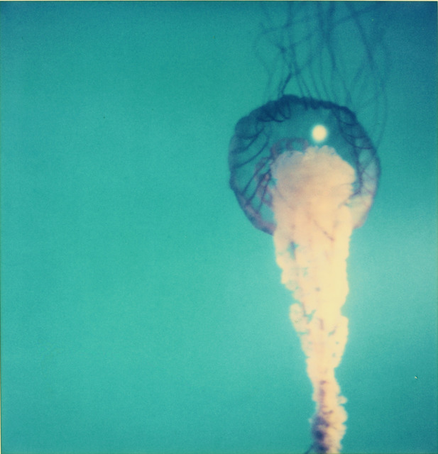 Stefanie Schneider, 'Jelly Fish from the movie Stay', 2006, Photography, Analog C-Print, hand-printed by the artist on Fuji Crystal Archive Paper,, Instantdreams