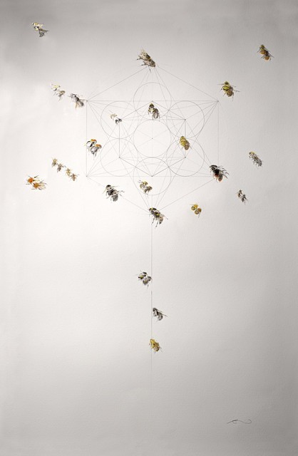 , '23 Species of Bees,' 2015, Lawrence Alkin Gallery