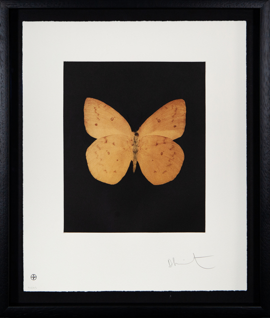 Damien Hirst, 'Prosperity', ca. 2009, The Drang Gallery