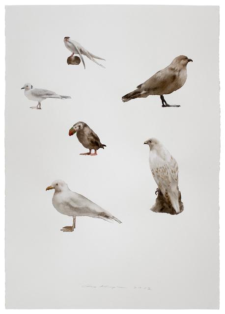 Guo Hongwei 郭鸿蔚, 'Not Yet Titled (Birds)', 2012, Leo Xu Projects