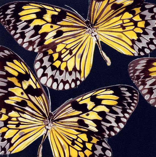 , 'Monarchs, Jan 24, 2006,' 2006, Galerie d'Orsay