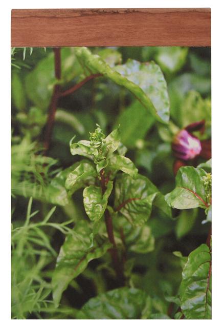 , 'Botany # 1,' 2014, Tatjana Pieters
