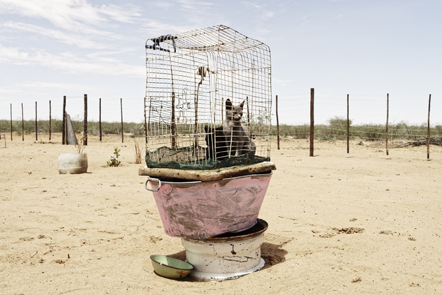 Margaret Courtney-Clarke, 'Caged Cats, Axab Pan, Kalahari, Namibia', 2019, SMAC