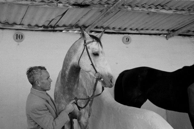 Constantine Manos, 'A groomsman cares for horses in a stable. Seville, Spain.', 1955, Print, Gelatin silver print, Magnum Photos