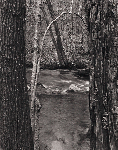 , 'Redding Woods, Redding, CT,' 1972, Pucker Gallery