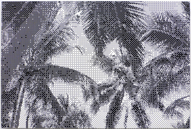 , 'Untitled, St. Lucia I,' 2015, Margaret Thatcher Projects