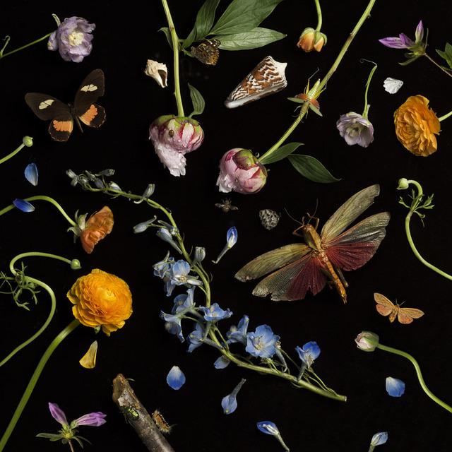 , 'Botanical II, Ranunculus and Delphiniums,' 2013, Snite Museum of Art