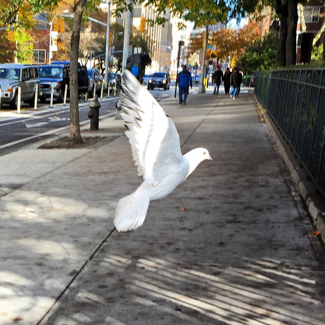 , 'Watch for Birds, NYC,' 2010, Machamux