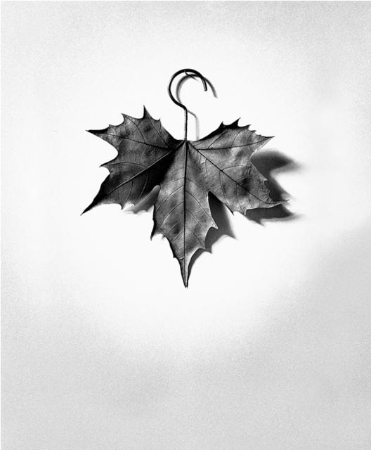 Chema Madoz, 'S/T (Leaf / Hanger), Madrid', 1999, Etherton Gallery