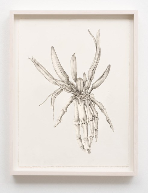 , 'Untitled (Skeleton Lily),' 2014, M+B