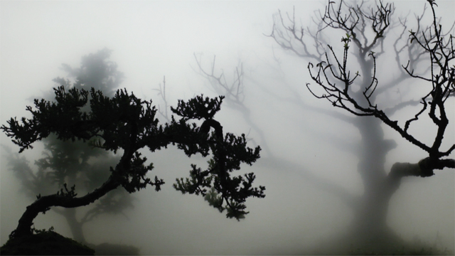 Wu Chi-Tsung, 'Landscape In The Mist 001', 2012, Sean Kelly Gallery
