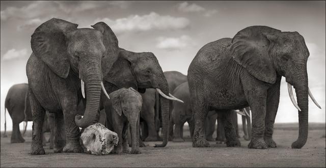 , 'Elephant Skull, Amboseli,' 2010, Edwynn Houk Gallery