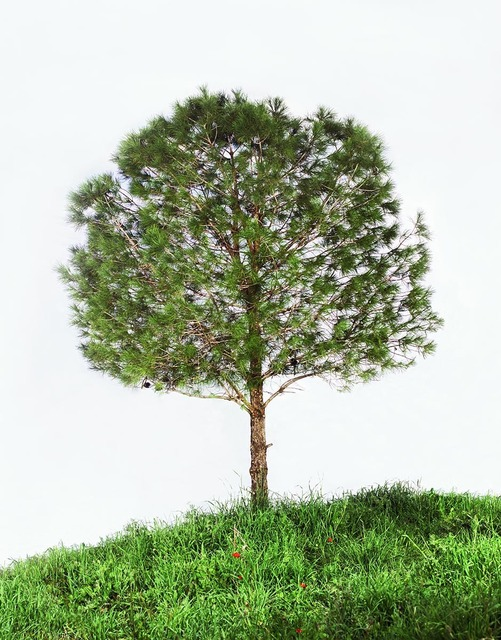 , 'Untitled (Pine Tree),' 2011, Rosenfeld Gallery