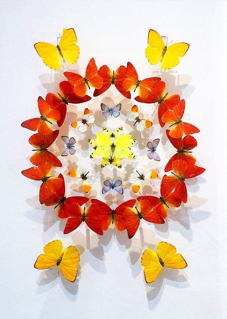 , 'Kaleidescope Orange,' 2019, M1 Fine Art