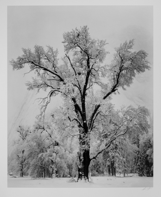 Ansel Adams, 'Oak Tree, Snowstorm, Yosemite National Park', ca. 1948, Photography West Gallery