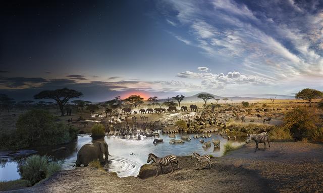, 'Serengeti National Park, Tanzania,' 2015, Bryce Wolkowitz Gallery