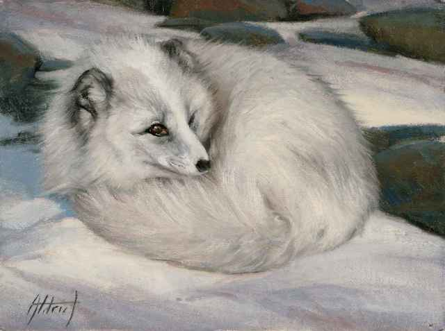 , 'Curled Up - Arctic Fox,' 2018, Sorrel Sky Gallery