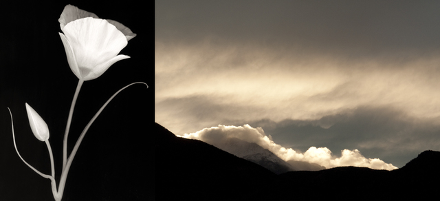 , 'Sego Lily/Pikes Peak Clouds,' 2013, Foto Relevance