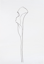 Calla Lily III, from Series of Plant and Flower Lithographs