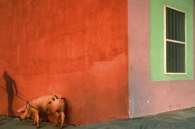 Pink Pig and Painted Walls