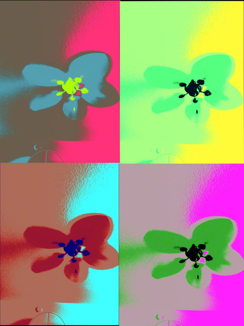 , 'Warhol Flowers,' 2017, Florida Fine Art