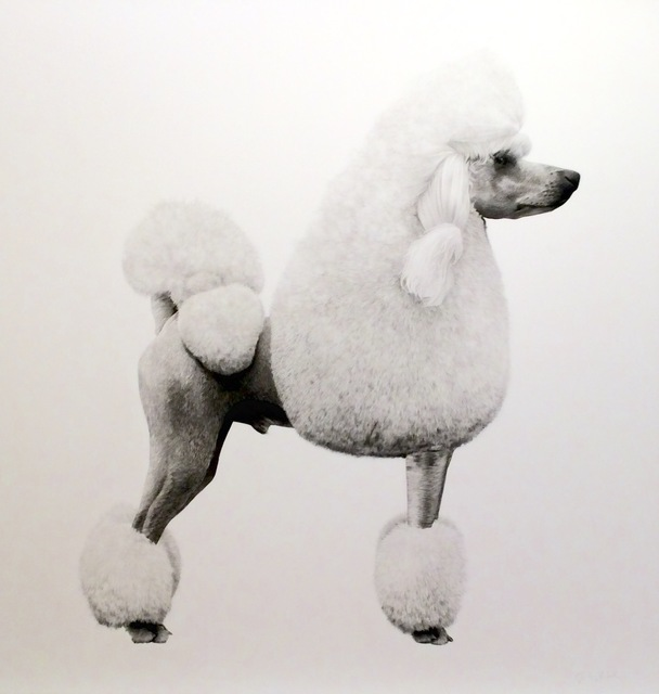 , 'Poodle I,' 2016, Purdy Hicks Gallery