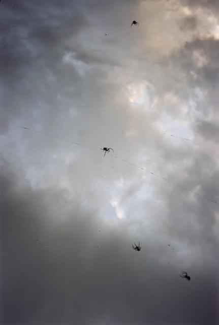 , 'Forest #25, Untitled (Tightrope Walker),' 2002, Yancey Richardson Gallery